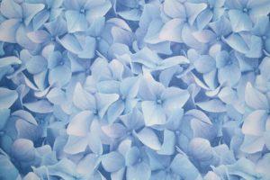 обои для стен голубые